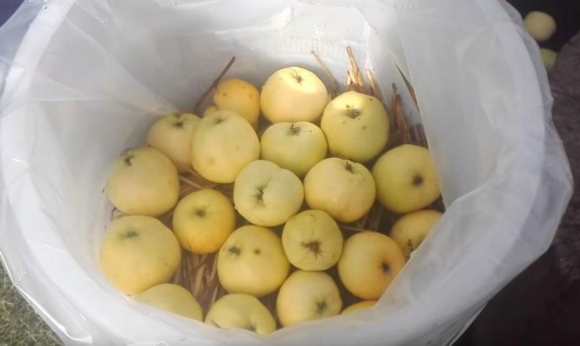 Как делать моченые яблоки на зиму