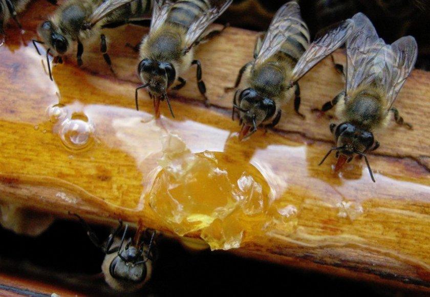 Кормление пчёл сиропом
