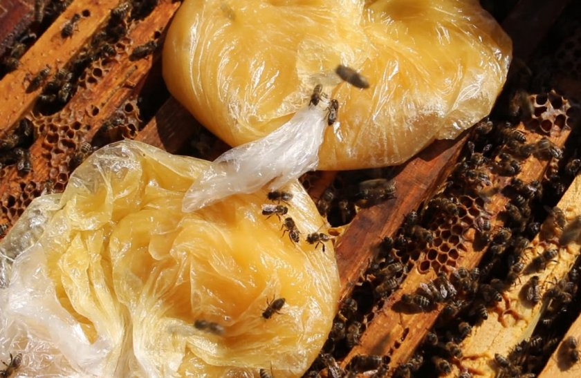 Подкормка пчёл мёдом