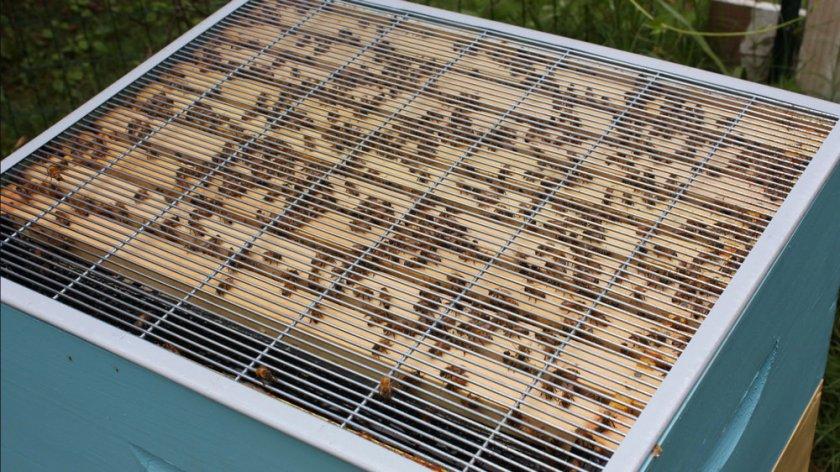 Разделительная решетка для пчёл