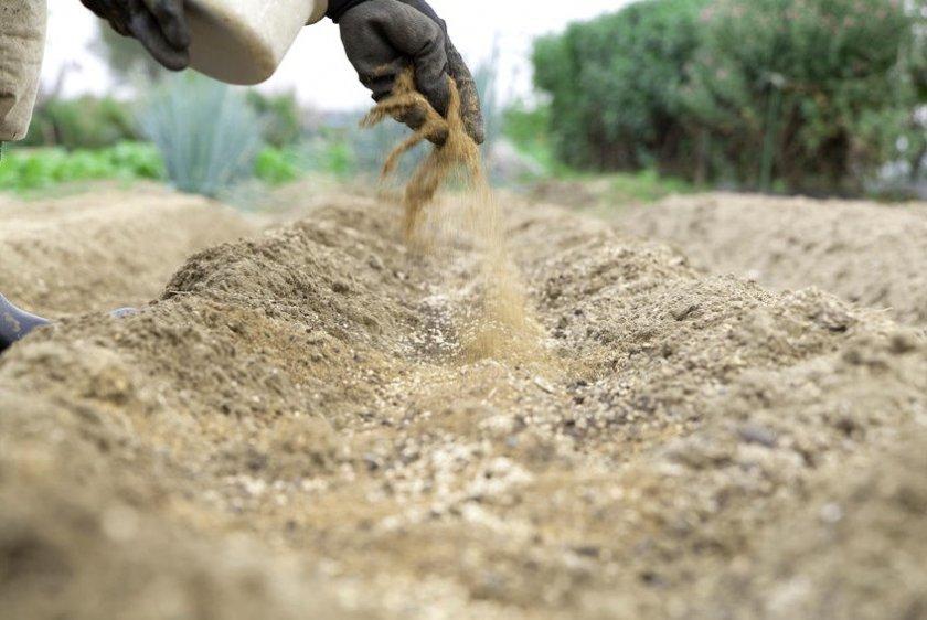 Внесение песка в почву перед посадкой чечевицы