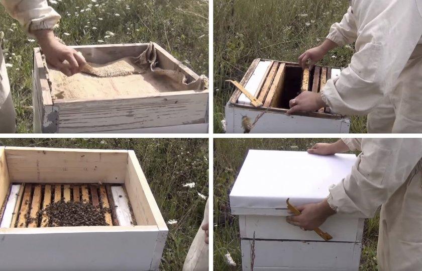 Как размножать пчёл отводками