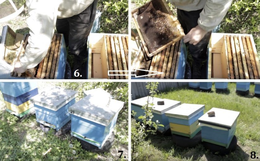 Деление пчелосемьи