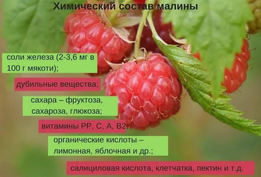 Химический состав малины