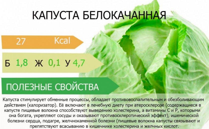 Полезные свойства белокочанной капусты