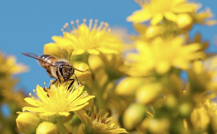 Значение пчелы в природе
