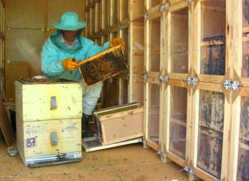 Содержание пчёл в кассетном павильоне