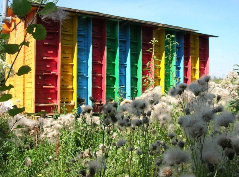 Стационарный павильон для пчёл