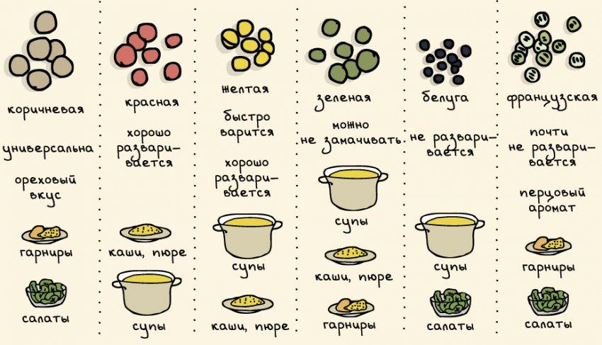 Сорта чечевицы и их применение