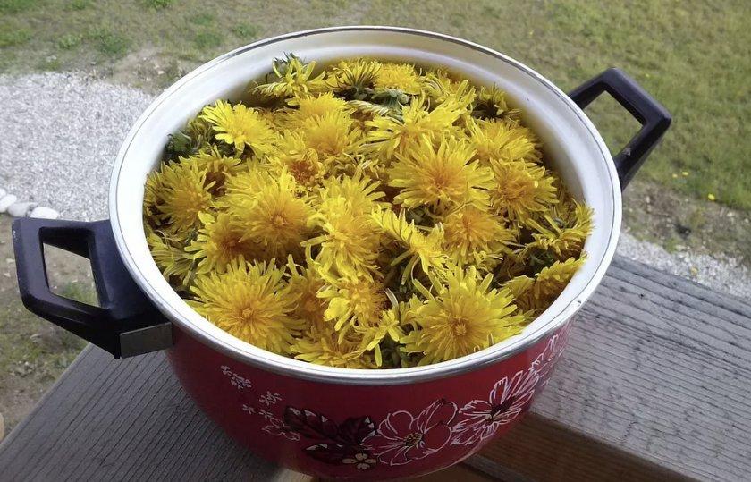 Одуванчики для приготовления мёда