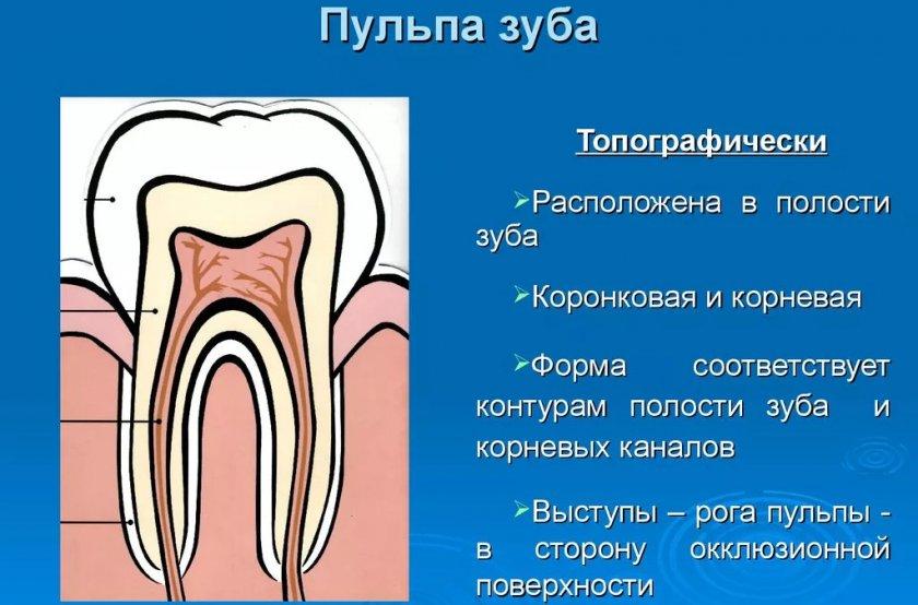 Пульпа зуба
