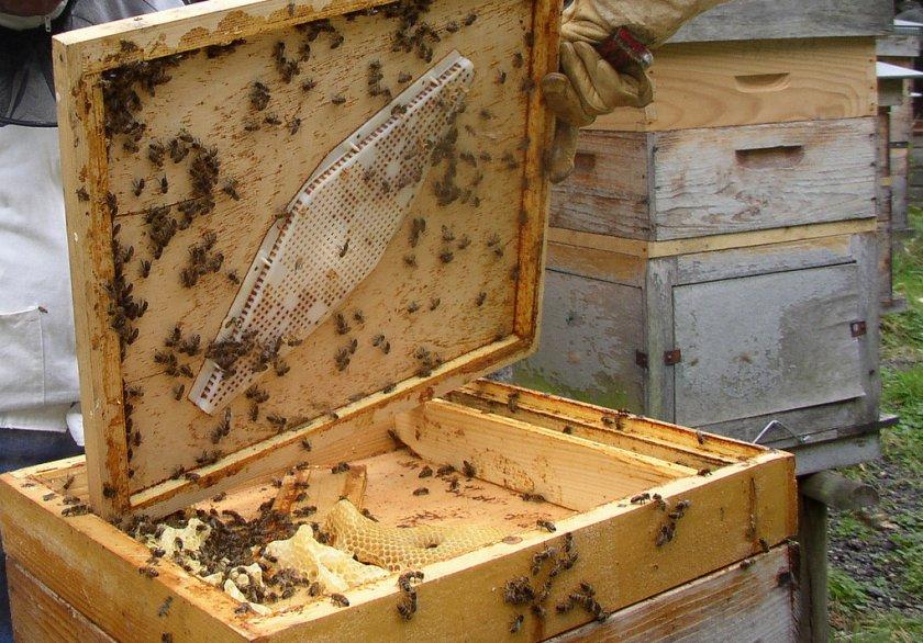 Содержание пчёл в 16-ти рамочном улье