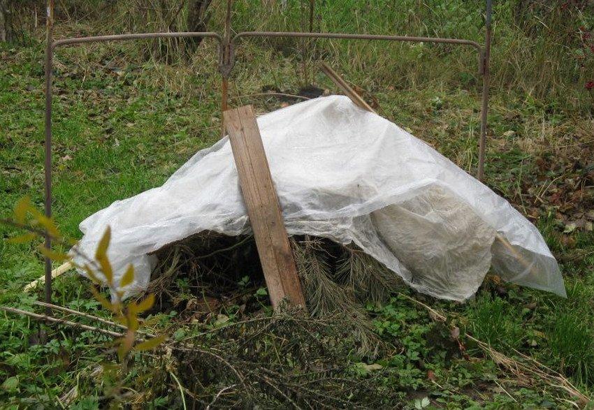 Подготовка малины к зимовке