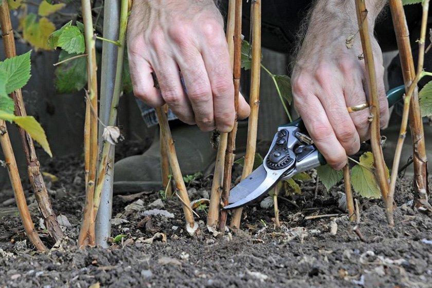 Садовый нож для обрезки малины