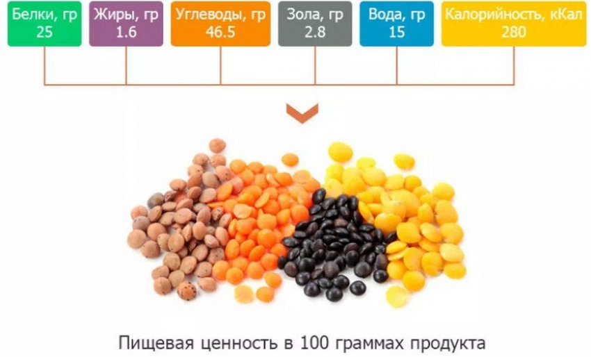 Пищевая ценность чечевицы