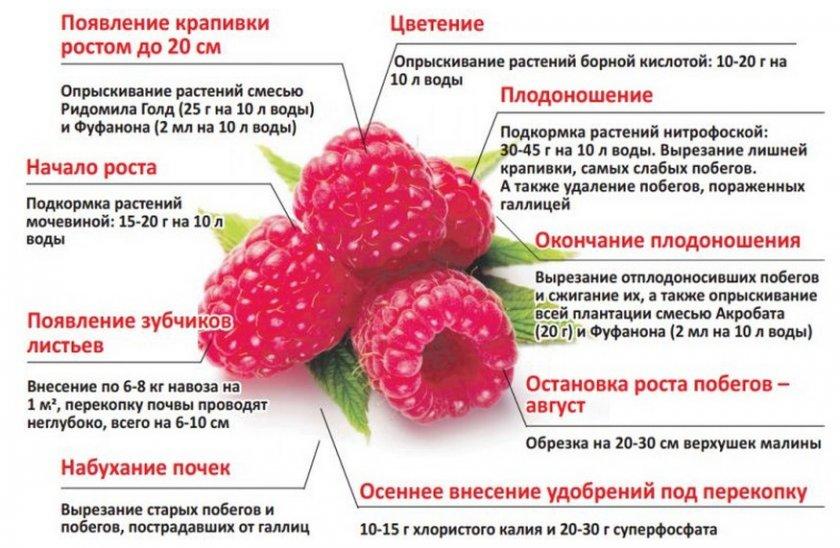 Подкормка малины на разных этапах