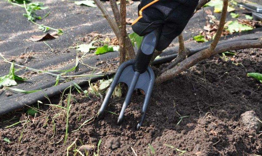 Рыхление почвы малины