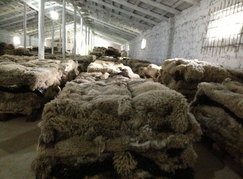 Сырье для получения овчины