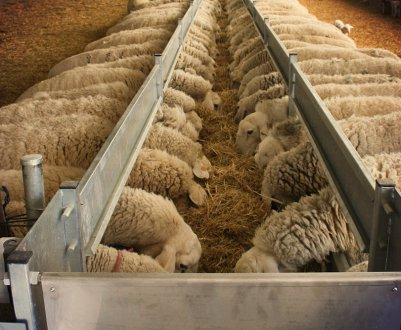 Кормушки, поилки, ясли для овец — самостоятельное изготовление