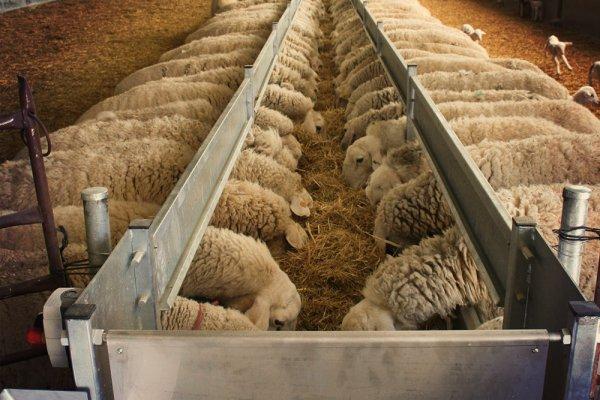 Поилки для овец