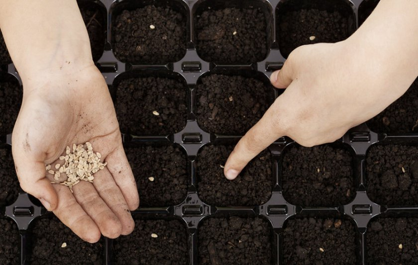 Посев семян
