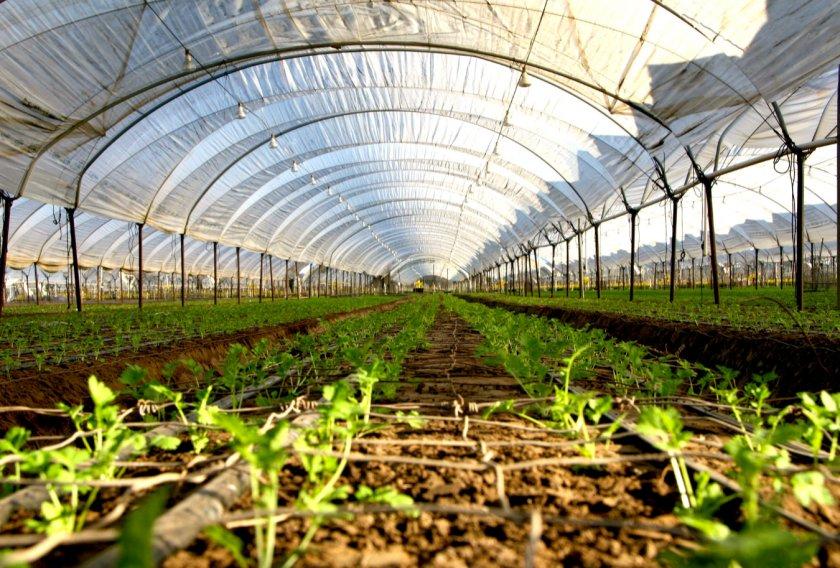 Российских и корейских аграриев объединит «тепличный вопрос»