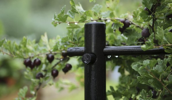 Ограждения для смородины из труб пвх