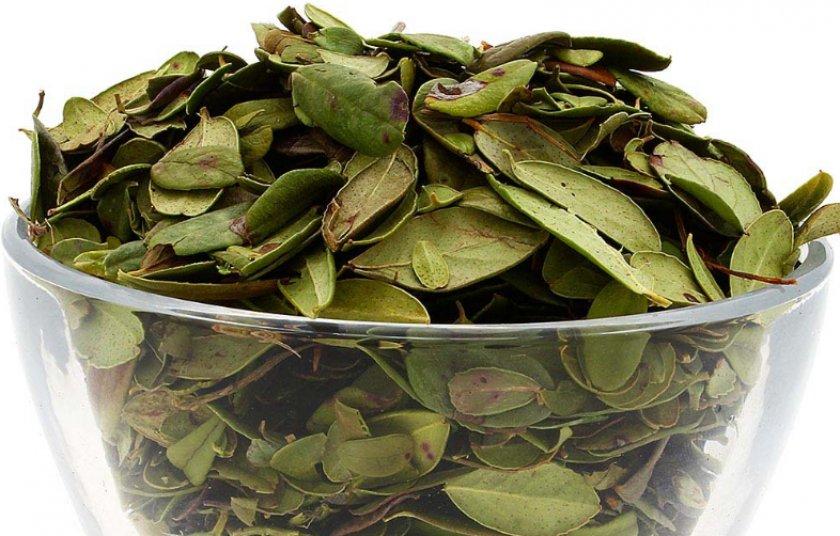 листья брусники от простатита