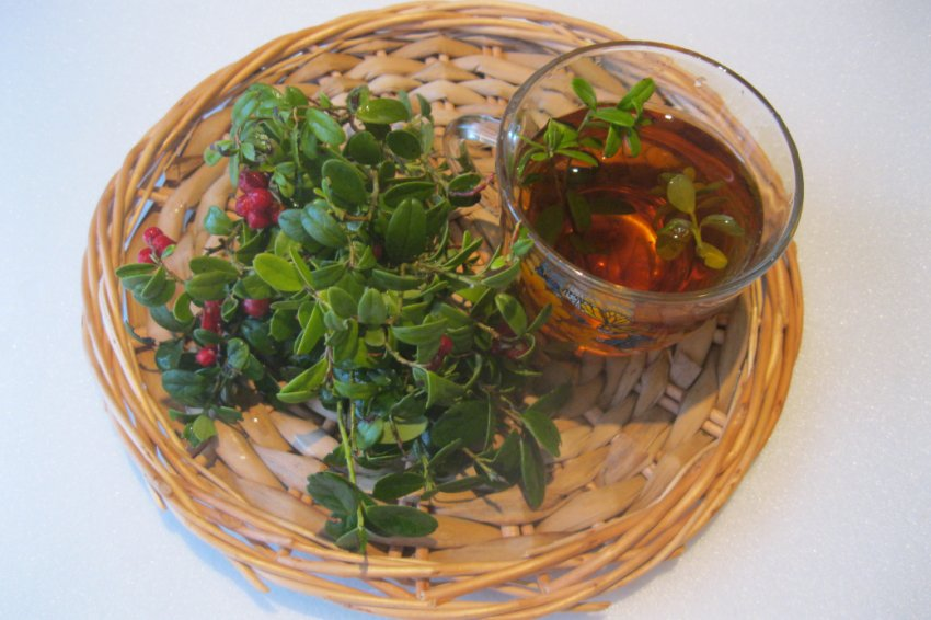 чай из листьев брусники отзывы