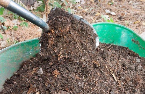 Какую почву любит ежевика кислую или щелочную