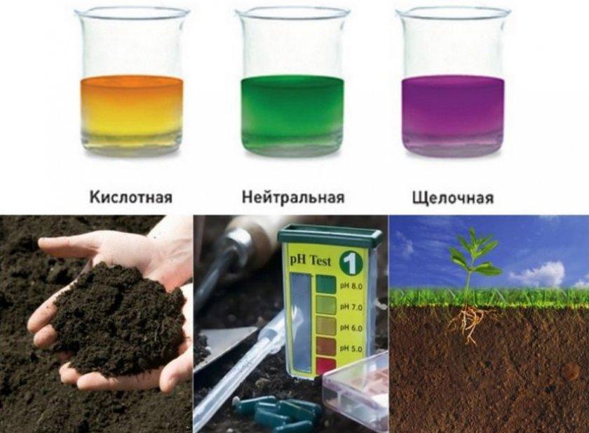Определение почвы