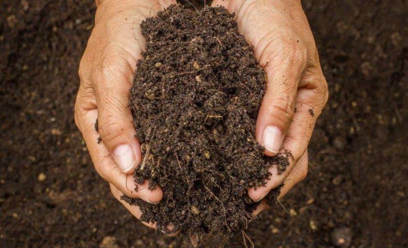 Почва для посадки малины