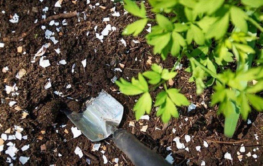 Удобрение почвы из яичной скорлупы