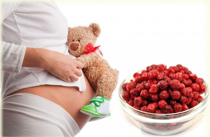 Брусника при беремености