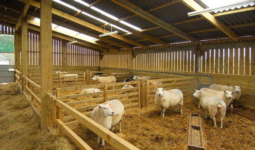 Оборудована овчарня для овец
