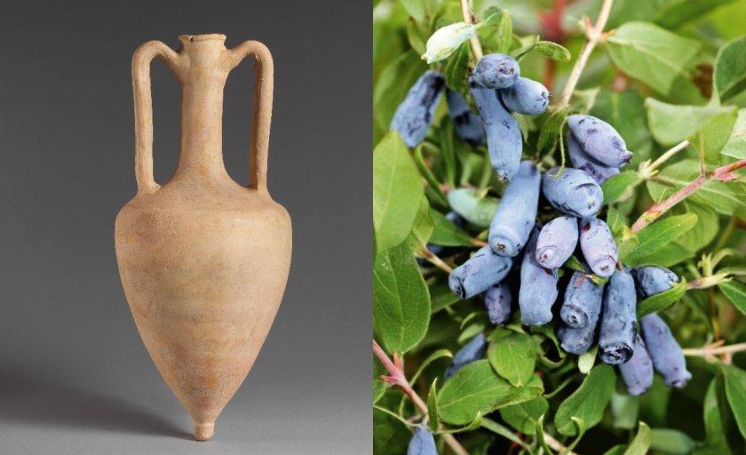 Сосуд Амфора и ягоды жимолости
