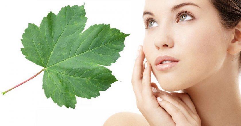 Листья смородины в косметологии