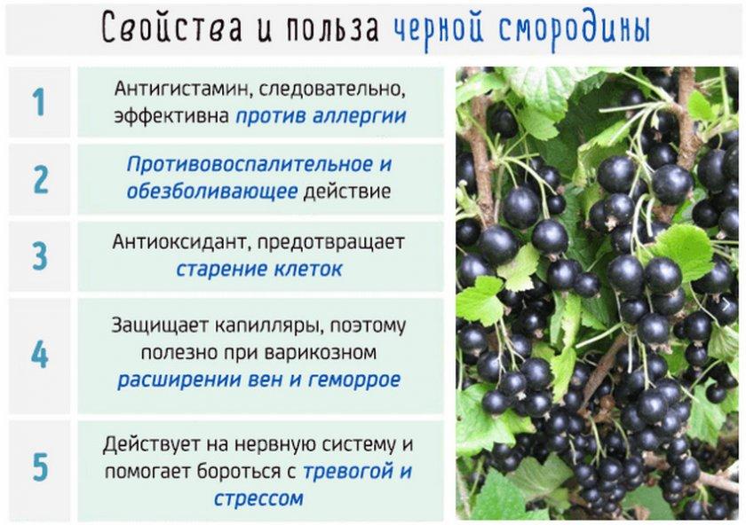 Полезные свойства чёрной смородины