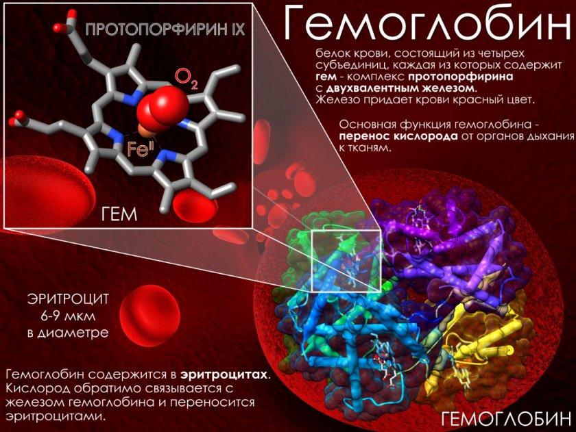 Повышение гемоглобина смородиной