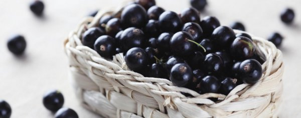 Черная смородина: полезные свойства и противопоказания для организма человека