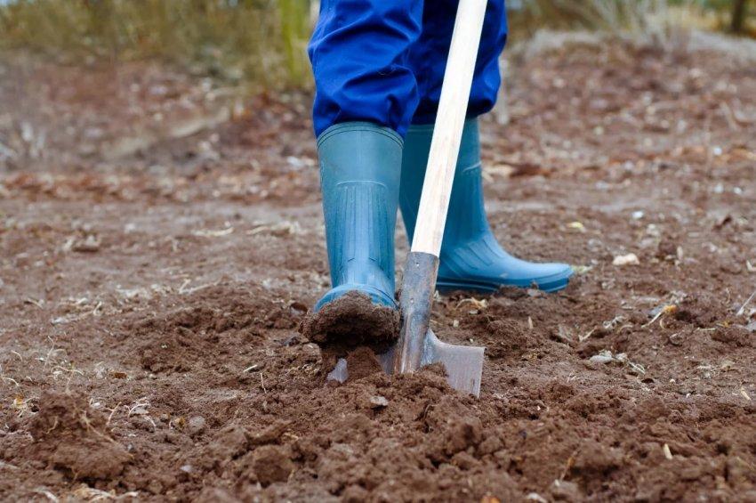 Подготовка почва перед посадкой