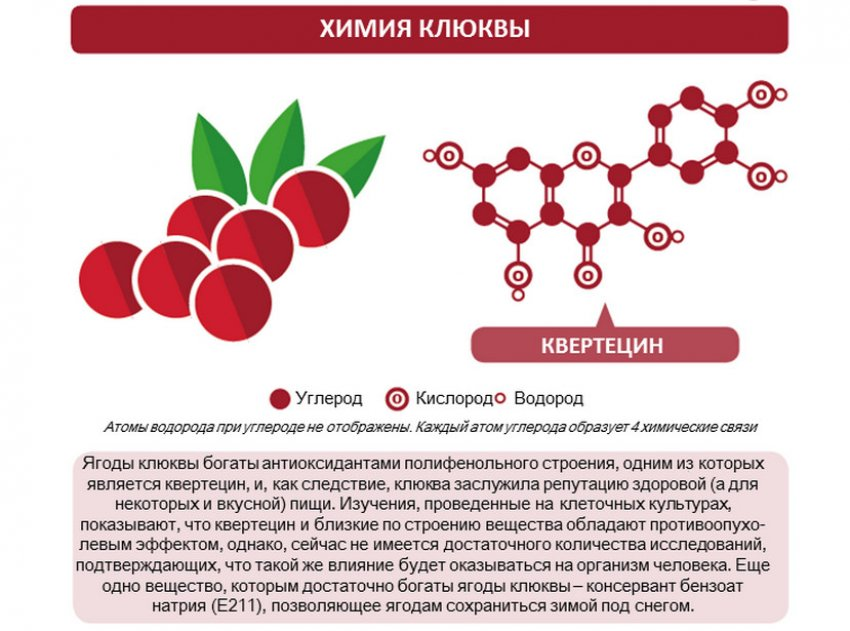 Химический состав клюквы
