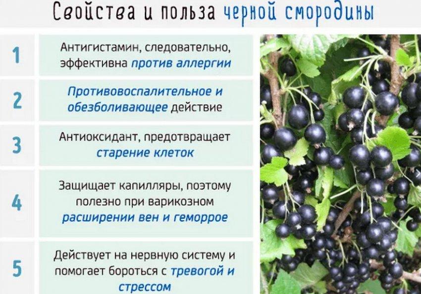 Состав и польза чёрной смородины