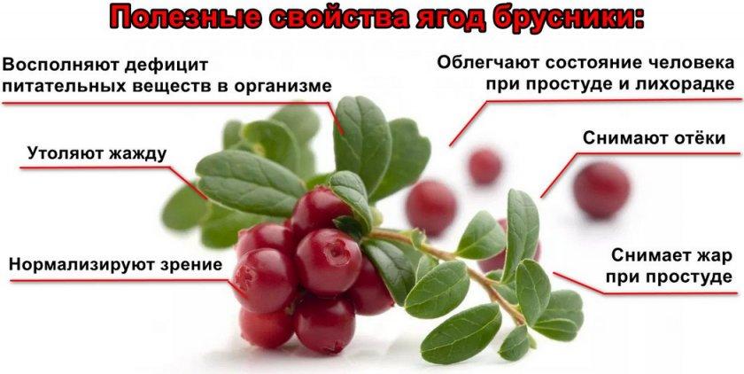 Польза ягод брусники