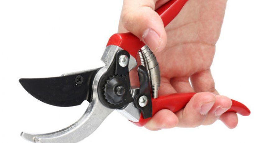 Ножницы для обрезки