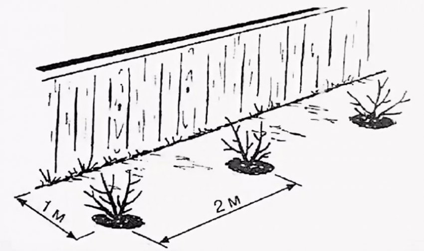Расстояние между посадками