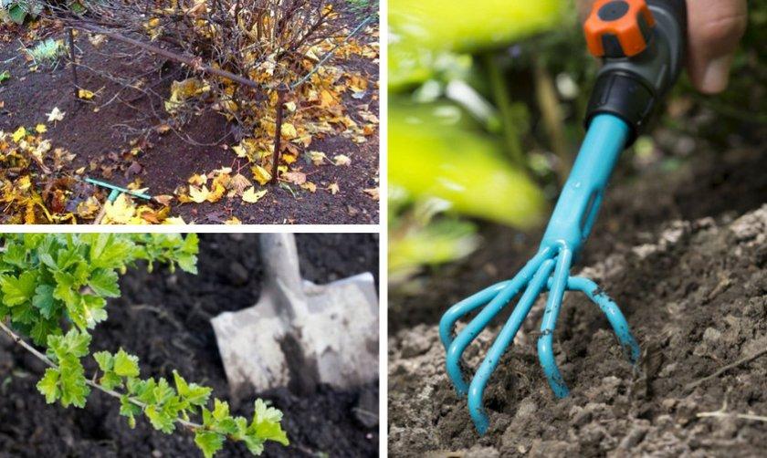Подготовка почвы под кустом