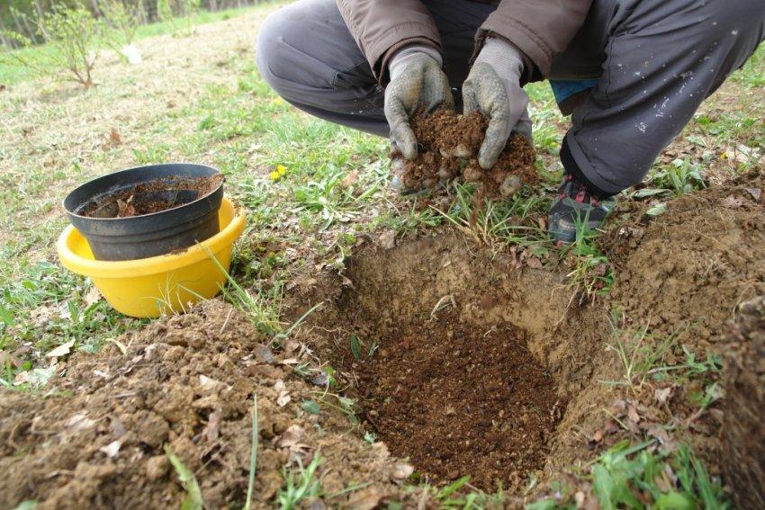 Посадочная яма и почва для посадки смордины