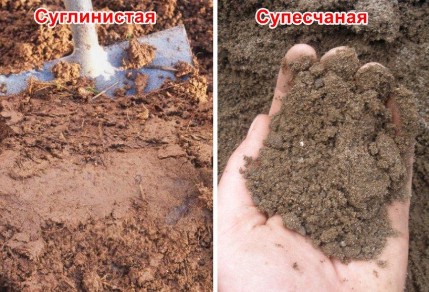 Супесчаная и суглинистая почва