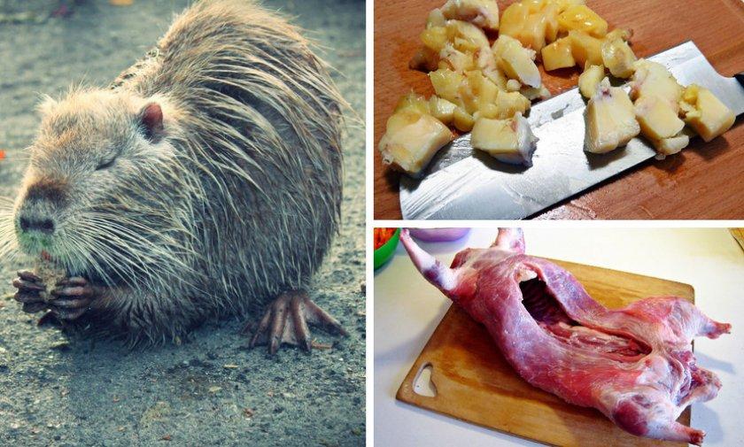 Жир и мясо из нутрии